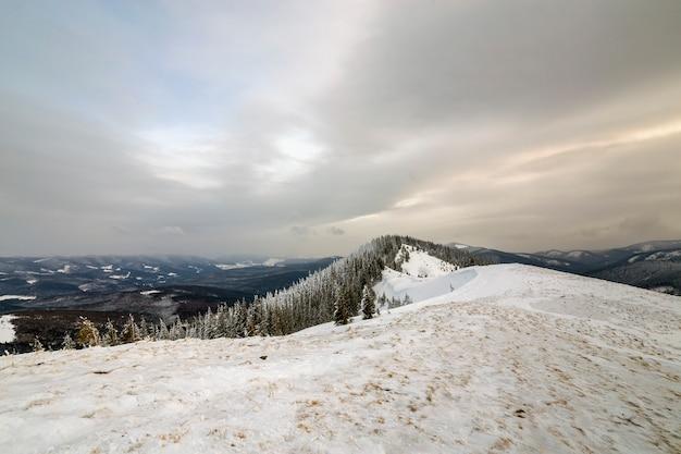 冬の山の風景、雪のピーク、寒い冬の日に曇り空の下のトウヒの木。