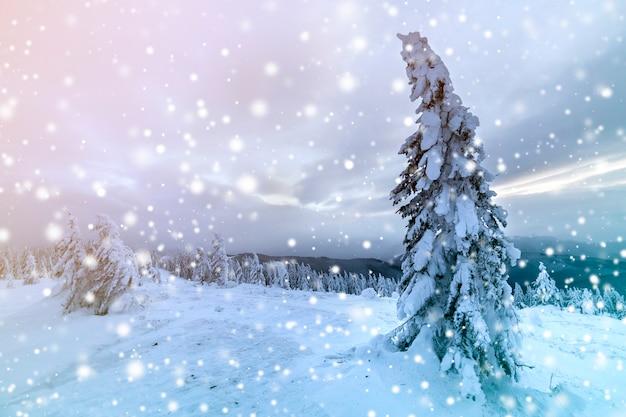 冬の青い風景。曇り空のコピースペースに寒い晴れた日にクリア山に深い雪のトウヒの木。