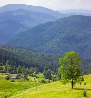 緑の牧草地に青い山と羊飼いの家に立っている緑の木