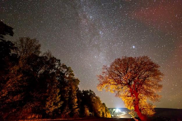 黒い星空の下の木の眺め