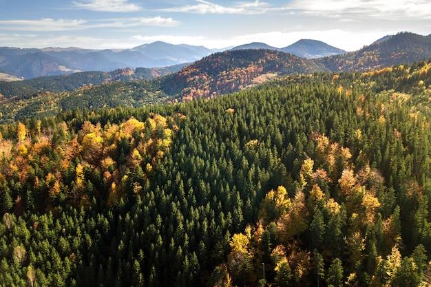 常緑の松の木と秋の山の風景と魔法の山々の距離で黄色の秋の森の空撮。