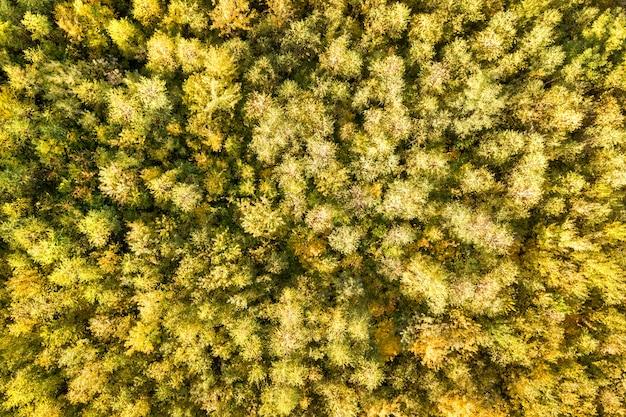 多くの新鮮な木がある秋の森の緑と黄色の天蓋の空撮を上から見下ろします。