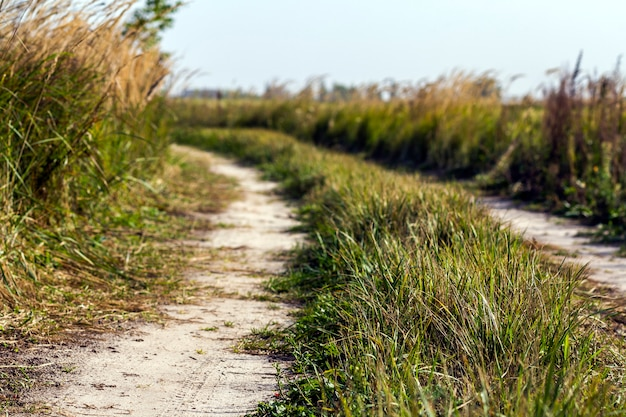 緑の芝生フィールド間の未舗装の道路のある田園風景のシーン