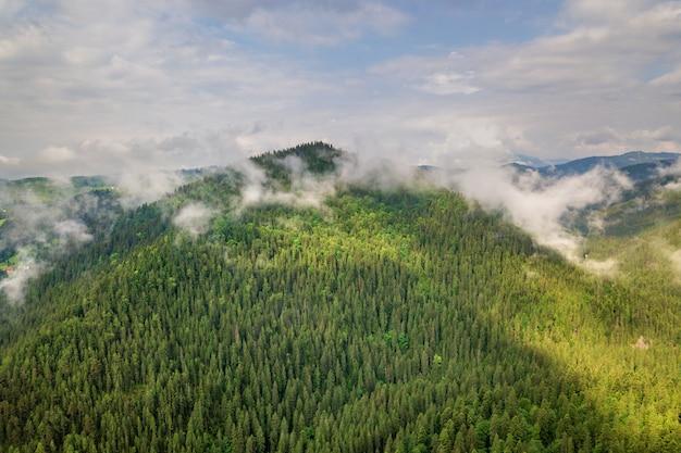 緑のカルパティア山脈の空撮は、夏の晴れた日で常緑のトウヒパインフォレストンで覆われています。