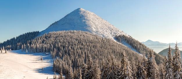 新鮮な雪の美しい冬のパノラマ。トウヒの松の木のある風景し、太陽の光と背景に高いカルパティア山脈と青い空。