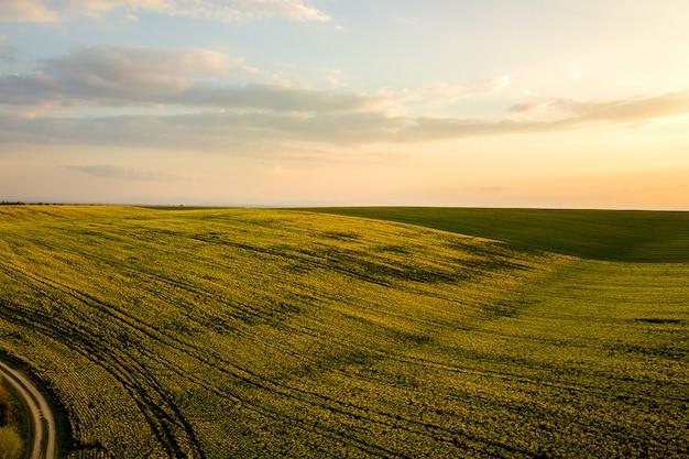 菜種植物の成長と日没で未舗装の道路を渡る明るい緑の農場の空撮。