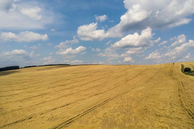 Вид с воздуха на желтом поле пшеницы сельского хозяйства готовы быть собраны в конце лета.