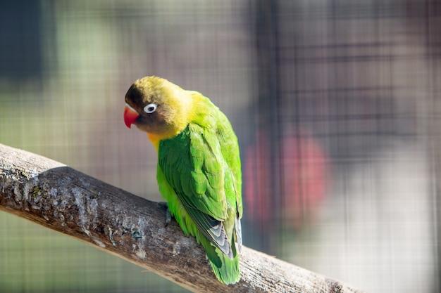 Красочный попугай в клетке на зоопарке.