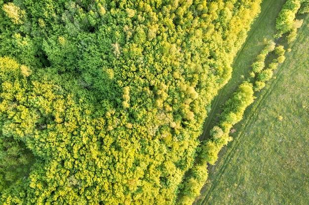 Вид сверху зеленого леса в солнечный весенний день