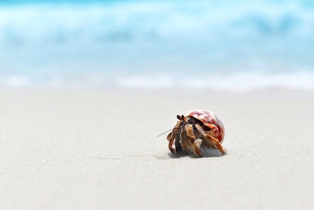 Отшельник гуляет по пляжу.
