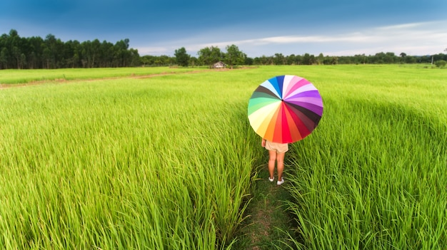 緑の田んぼでカラフルな傘。
