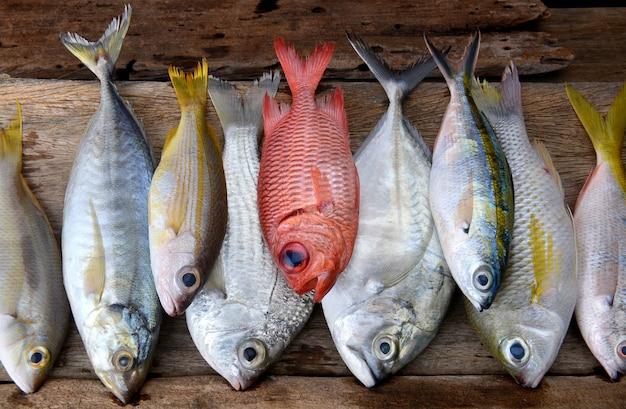 カラフルな新鮮な魚を混ぜる
