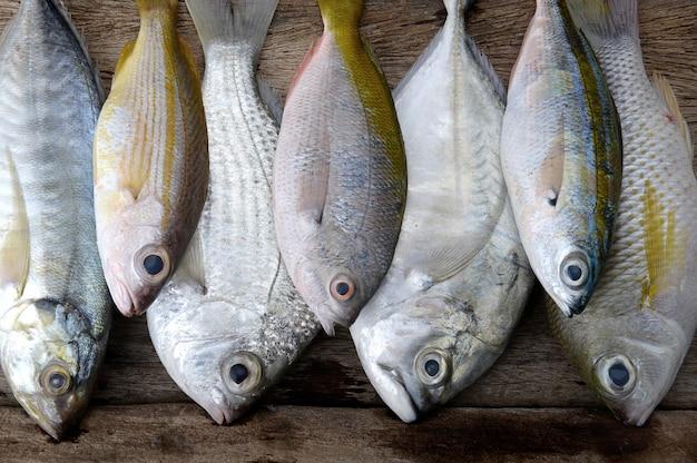 カラフルな海の魚を混ぜます。