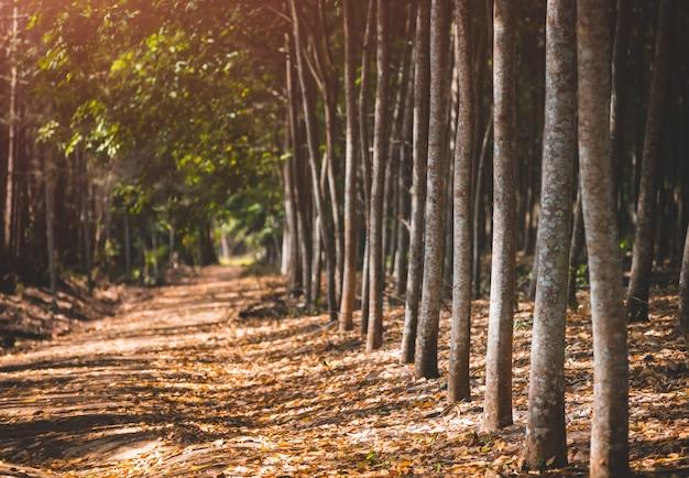 Дорога с деревьями в осенний сезон.