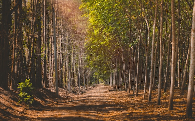 秋の季節の木側の道。