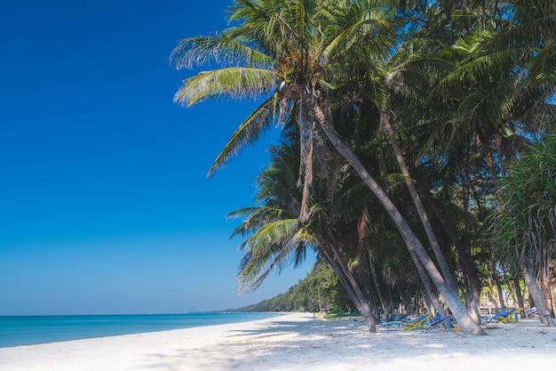 Пейзаж морского пляжа и кокосовой пальмы.