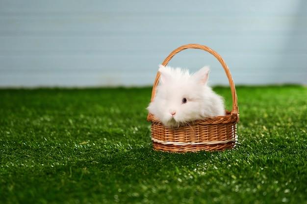 Маленький пушистый белый кролик ангорской породы, сидящий в корзине на зеленом коврике