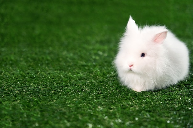Маленький пушистый белый кролик сидит на зеленой циновке из искусственной травы. копировать пространство