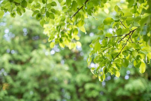 日光の下で美しさのボケ味を持つ緑の葉のクローズアップビュー。