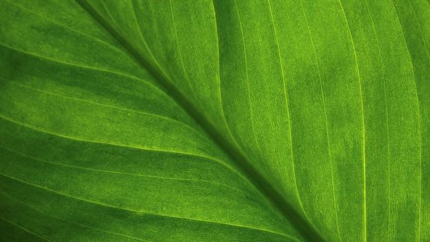 抽象的な緑の縞模様の自然の背景