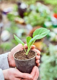Посадите рассаду в руки человека.