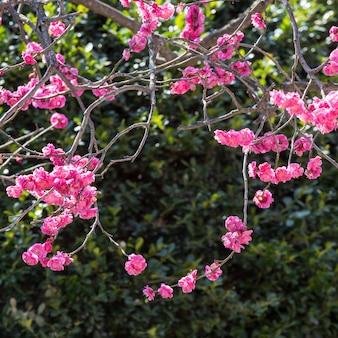 赤い花の自然に成長した花輪。