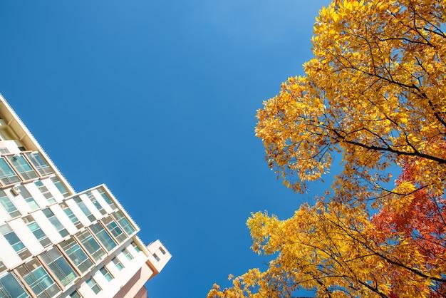 カラフルな色のカエデと青い空と建物