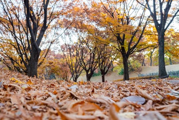 Осенние листья. осенний пейзаж. сеульский олимпийский парк в южной корее.