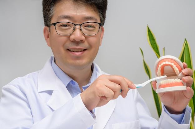 Азиатский стоматолог среднего возраста, держащий в руках зубные модели и зубные щетки.