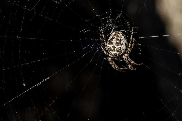 クモの巣で獲物を待っている白いクモ