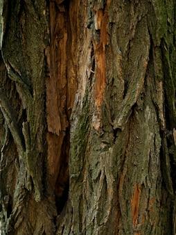 Закройте вверх по текстуре коры дерева. деревянный .
