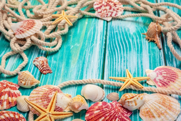 Различные морские раковины на цвет деревянных фоне
