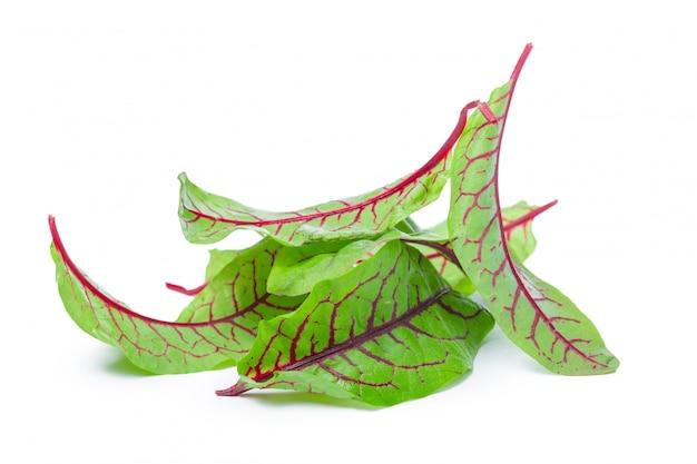 分離された新鮮なビートの葉