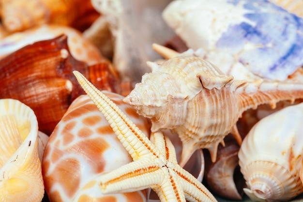 海の貝。自然。