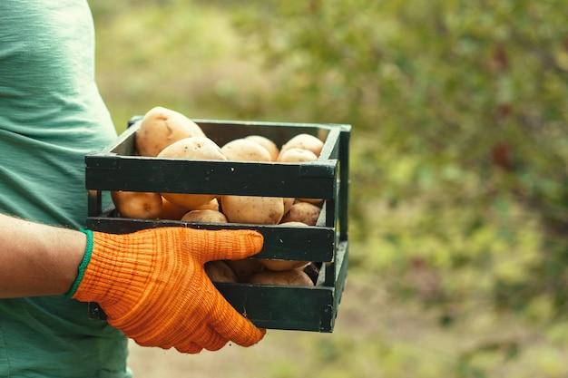 土の手でジャガイモ