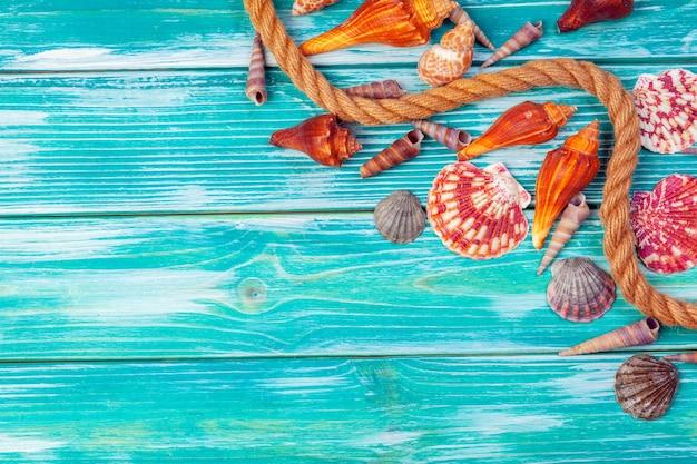 Разные морские раковины на цвет дерева
