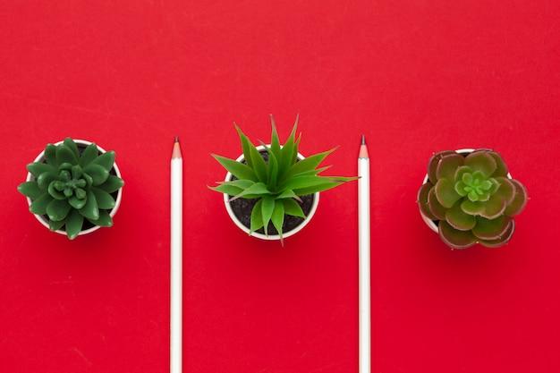 Карандаши и два сочных растения на красном вид сверху