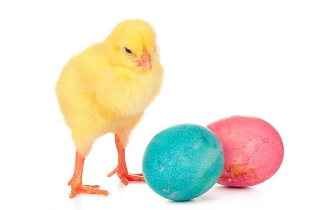 Красочные пасхальные яйца и милый маленький цыпленок на белом