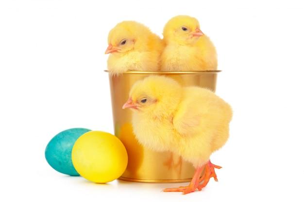 カラフルなイースターエッグと白で隔離されるかわいい小さな鶏