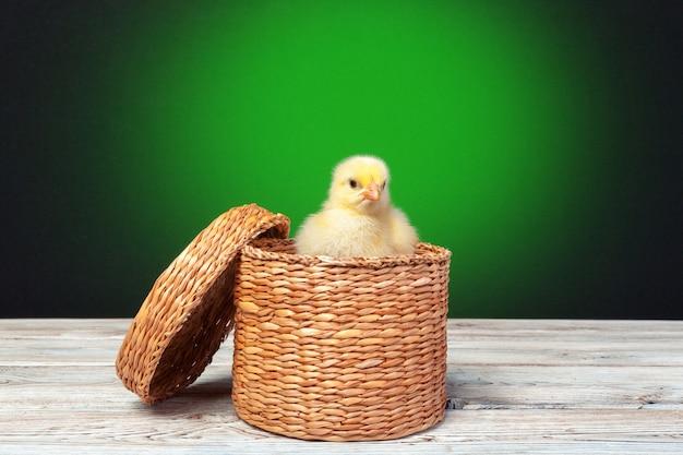 Красивая маленькая курица в гнезде