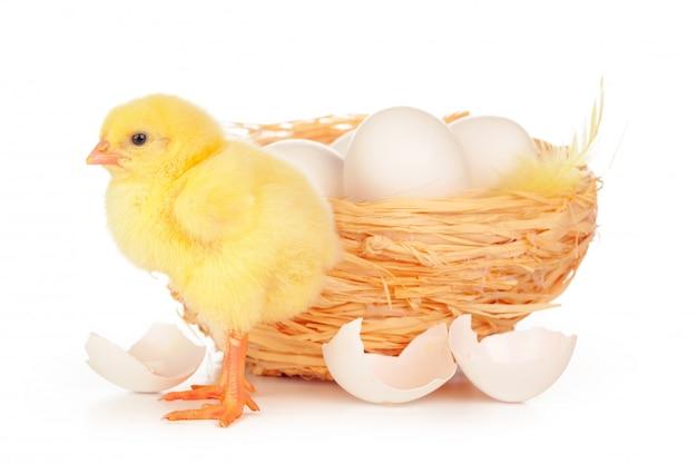 Маленький птенец и яйца в гнезде, изолированные на белом