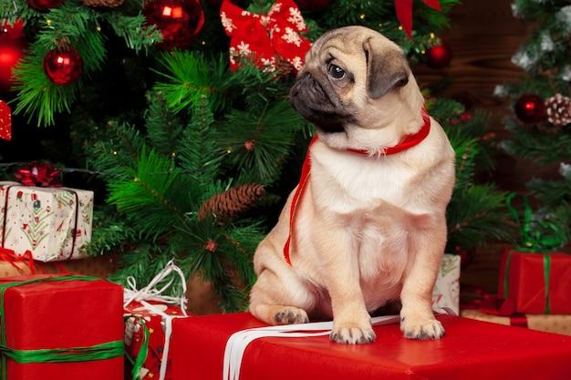 クリスマスプレゼントとパグ