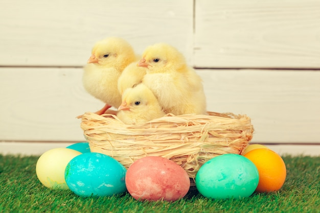 Пасхальные яйца и цыплята на зеленой траве