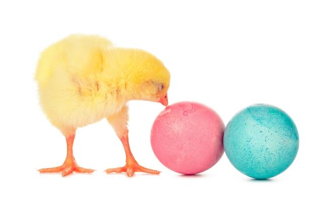 イースターのカラフルな卵と分離されたかわいい小さな鶏