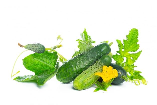 白で隔離される葉と花の自然野菜有機食品とキュウリ