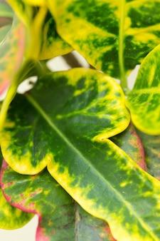 緑の新鮮な植物の草のクローズアップ
