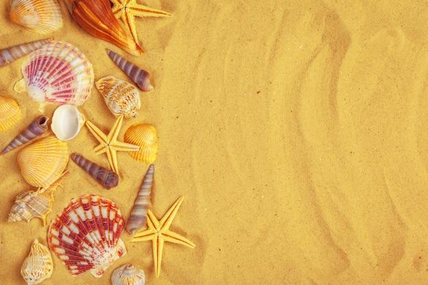 Ракушки на песке. море летние каникулы фон