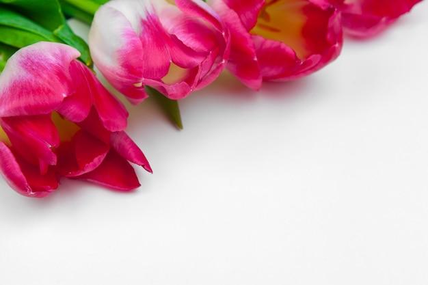 Свежие цветы тюльпана на белом фоне