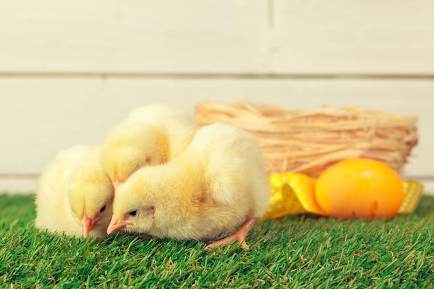イースターエッグと鶏の緑の芝生