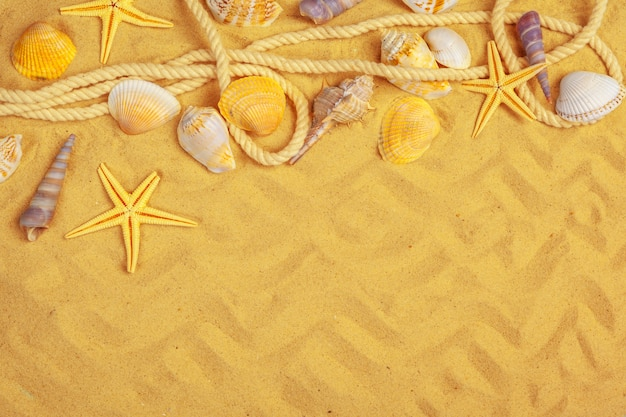 Ракушки на песке. море летних каникул